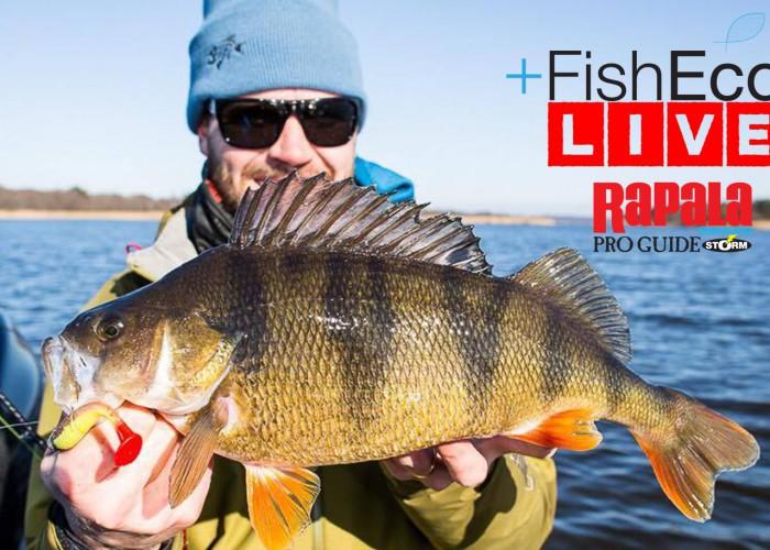 Livefiske efter abborre med Fisheco!