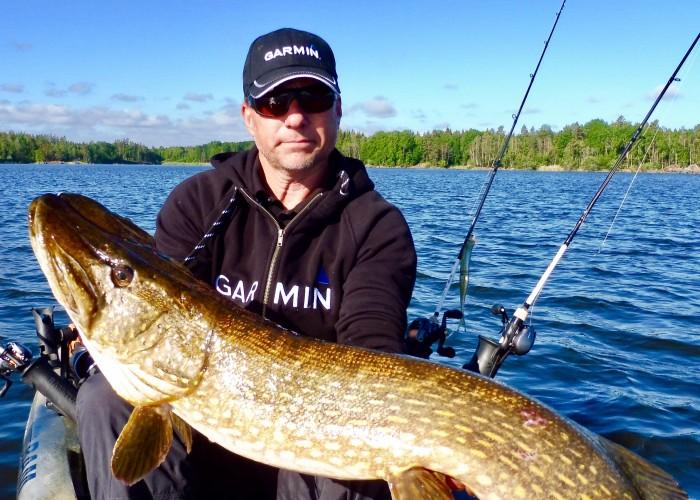 Fin bonusgädda vid gösfiske 115cm