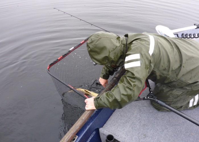 Stor håv för både dig och fiskens skull!